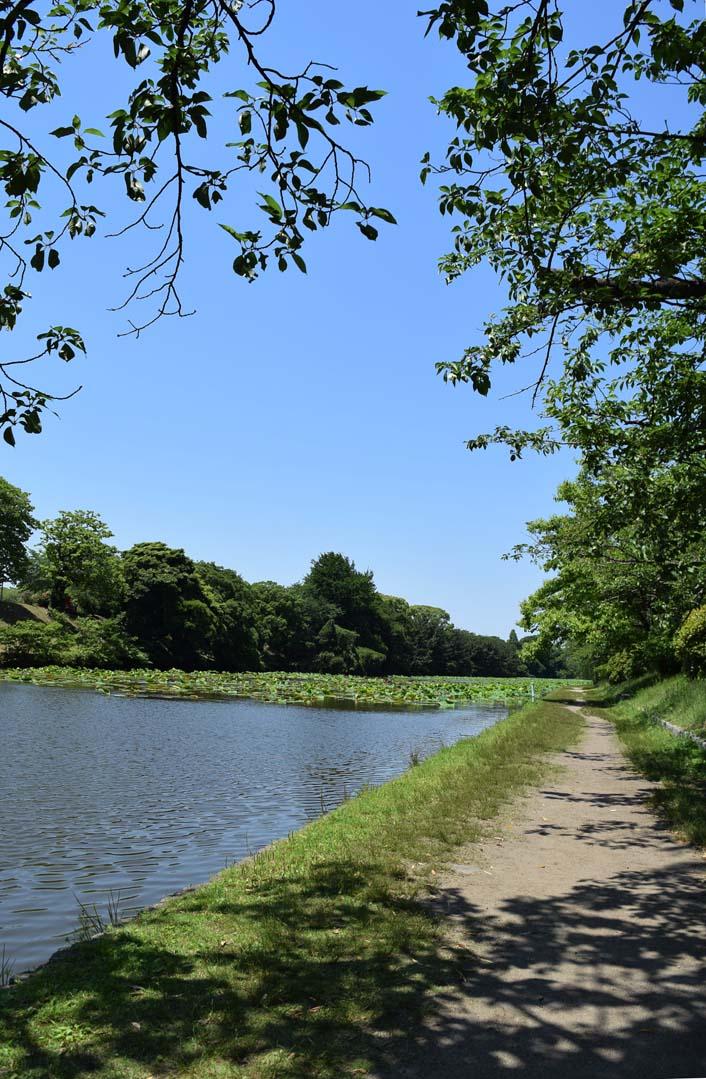 福岡市舞鶴公園の散歩道