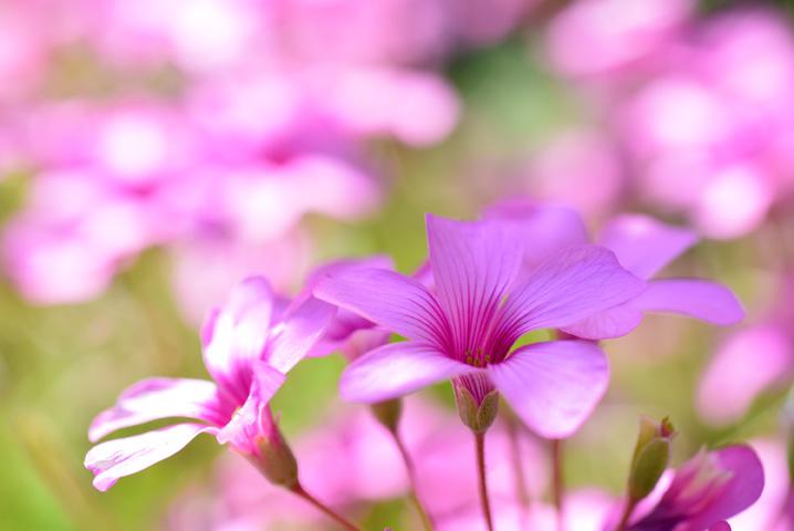 草花を接写