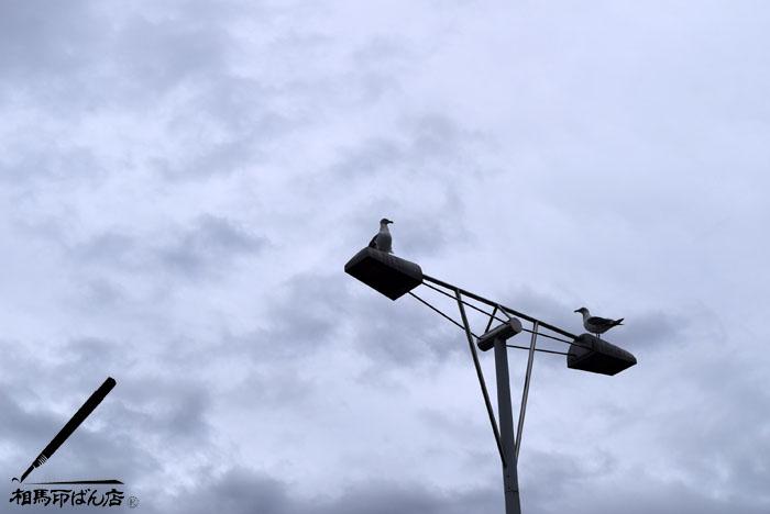 街路灯とカモメ