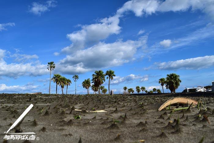 サンマリーンビーチの芝生が砂地化