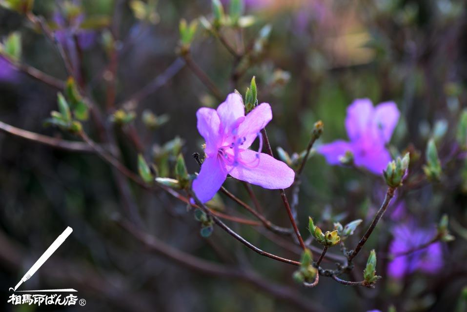 薄いピンク色の花びら