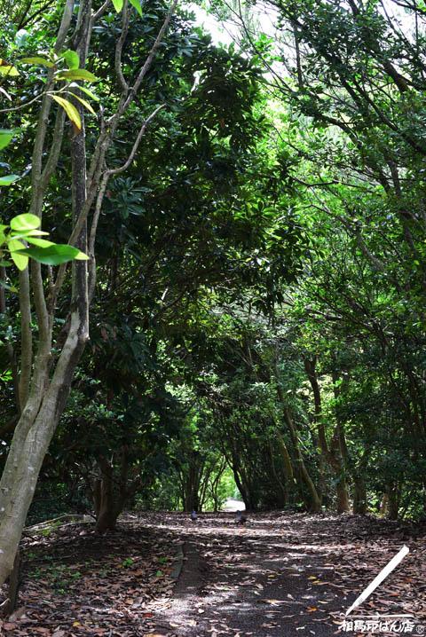 防風林の中の遊歩道