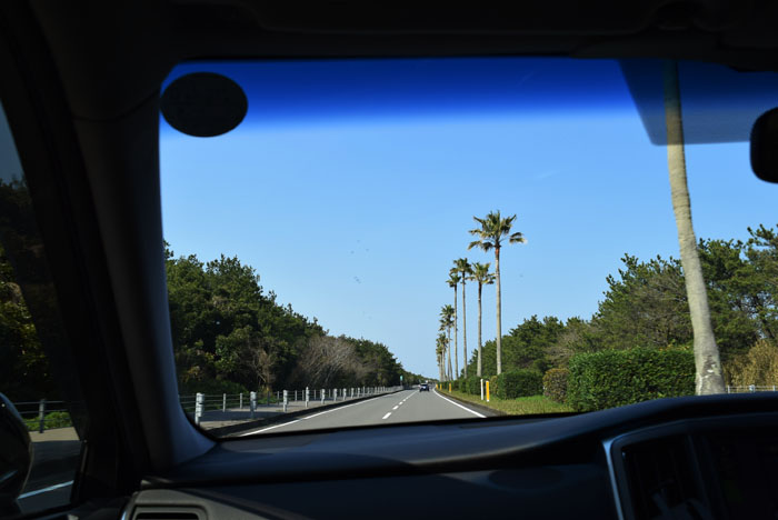 ワシントニアパームスが立ち並ぶ道を快適ドライブ