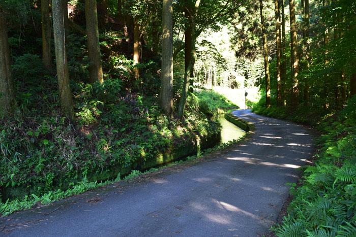陣の池に通じる一本道