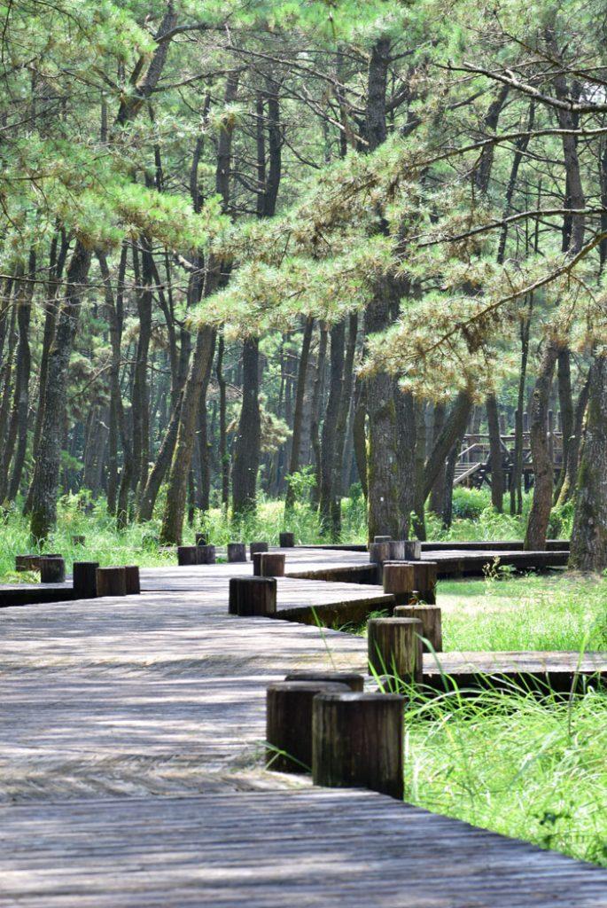 阿波岐原の遊歩道