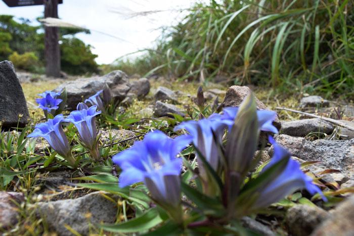 紫の綺麗な花