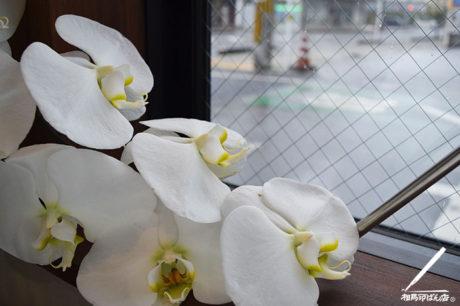 長く咲き続ける白い胡蝶蘭